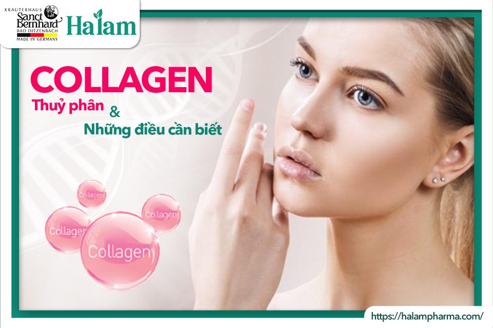 Collagen thủy phân và những điều cần biết